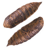 Cocoon Stock Images