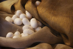 Free Cocoons And Silk Stock Photos - 10832463