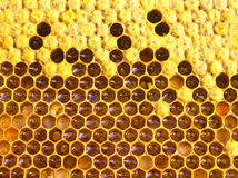 Cocoons bee, nectar, honey and pollen. In cells are the larvae of the future of bees, honey, nectar and pollen royalty free stock photography