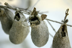Cocoons Royalty Free Stock Photos