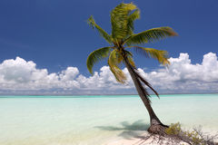 Cocopalm op het blauwe strand van de waterlagune Stock Afbeeldingen