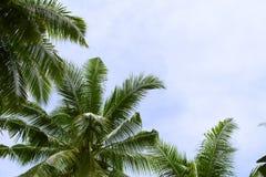Cocopalmblad på himmelbakgrund Semesterdag på den tropiska ön Royaltyfri Fotografi