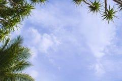 Cocopalmblad på himmelbakgrund Solig dag på den tropiska ön Royaltyfria Bilder