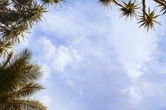 Cocopalmblad på himmelbakgrund Tropisk tonat foto för ö tappning Arkivbild