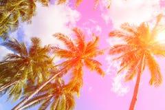 Cocopalmträd i signal för varma rosa färger ligganden gömma i handflatan tropiskt royaltyfri fotografi