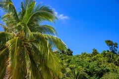 Cocopalmträd på bakgrund för blå himmel Tropisk önatursikt Optimistiskt landskap för grön djungelskog royaltyfri fotografi