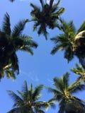 Cocoparadise Royalty Free Stock Photo
