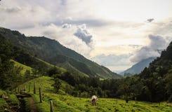 Cocora dal, Quindio, Colombia Fotografering för Bildbyråer