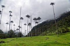 Cocora-Tal-Hügel Stockfoto