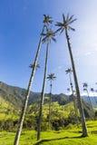Cocora-Tal mit riesigen Wachspalmen nahe Salento, Kolumbien Lizenzfreie Stockfotografie