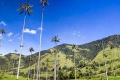 Cocora-Tal mit riesigen Wachspalmen nahe Salento, Kolumbien Stockfotos