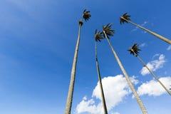 Cocora-Tal mit riesigen Wachspalmen nahe Salento, Kolumbien Lizenzfreie Stockfotos