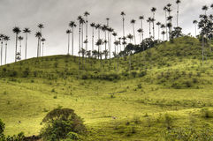 Cocora valley Royalty Free Stock Photos