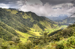 Cocora valley. The valley of Cocora near Salento, Colombia Stock Photography