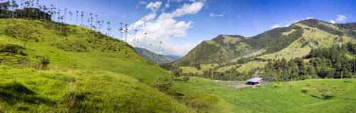 Cocora valley with giant wax palms  near Salento, Colombia Stock Photos