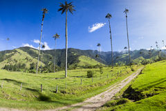 Cocora valley with giant wax palms  near Salento, Colombia Royalty Free Stock Photo