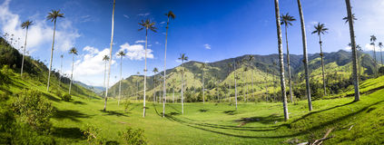 Cocora valley with giant wax palms  near Salento, Colombia Royalty Free Stock Photography