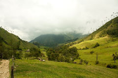 Cocora Valley, Natural Park of Colombia stock images