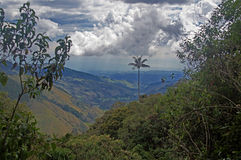 Cocora valley near Salento, Colombia Stock Photography