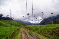 Cocora Valley Road. In Quindio, Colombia Stock Image