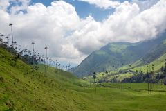 Cocora Valley and Sky. Beautiful Cocora Valley and wax palm trees near Salento, Colombia royalty free stock photos