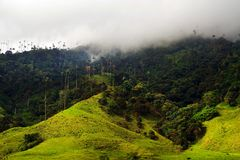 View of Cocora Valley in Salento, Colombia. The Cocora valley - Valle de Cocora in spanish - is a valley in the department of Quindío in the country of stock photo