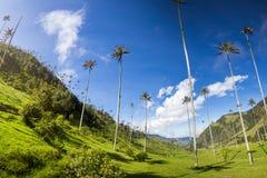 Cocoravallei met reuzewaspalmen dichtbij Salento, Colombia royalty-vrije stock foto
