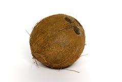 Cocos Lizenzfreies Stockbild