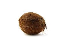 cocos Obrazy Stock