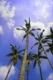 Cocos Lizenzfreies Stockfoto