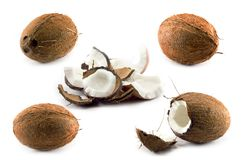 Cocos Photos stock