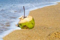 Cocos Fotos de archivo libres de regalías