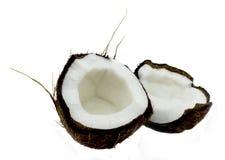 Cocos Photographie stock libre de droits