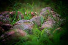 cocos Imagen de archivo libre de regalías