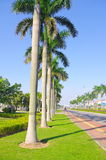 Cocos around street of city at china Royalty Free Stock Photography