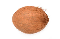 Cocos. On the background belogm Royalty Free Stock Photo