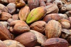Cocos, con la piel externa Imágenes de archivo libres de regalías