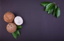 Cocos con las hojas verdes frescas en un fondo púrpura oscuro Coco delicioso cortado por la mitad Ingredientes para los gastrónom Fotografía de archivo libre de regalías