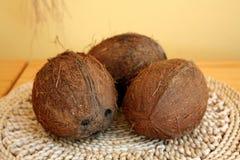 Cocos da árvore no forro da malha imagens de stock