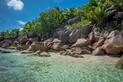 Cocos de Anse Fotografia de Stock