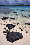 Cocos de Deus em Maurícia Imagem de Stock