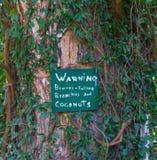 Cocos de queda do sinal de aviso Fotografia de Stock Royalty Free