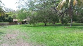 Cocos del hogar de Costa Rica Imágenes de archivo libres de regalías