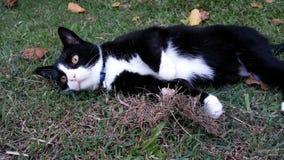 Cocos die Katze lizenzfreie stockfotografie