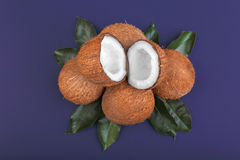 Cocos dulces en un fondo púrpura oscuro Vitaminas Cocos tropicales con las hojas verdes Nueces orgánicas y nutritivas Foto de archivo libre de regalías