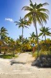 Cocos en el camino tropical de la playa, Cuba Foto de archivo
