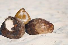 Cocos en la arena Imágenes de archivo libres de regalías