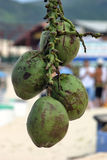 Cocos en la playa Imágenes de archivo libres de regalías