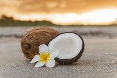 Cocos en la playa Imagen de archivo libre de regalías