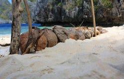 Cocos en la playa tropical Fotografía de archivo libre de regalías